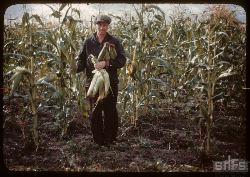 65 acres of hybrid corn.  North Battleford.  09/21/1944