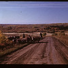 Cattle comimh in from the NW	 Frenchman Butte	 09/29/1947