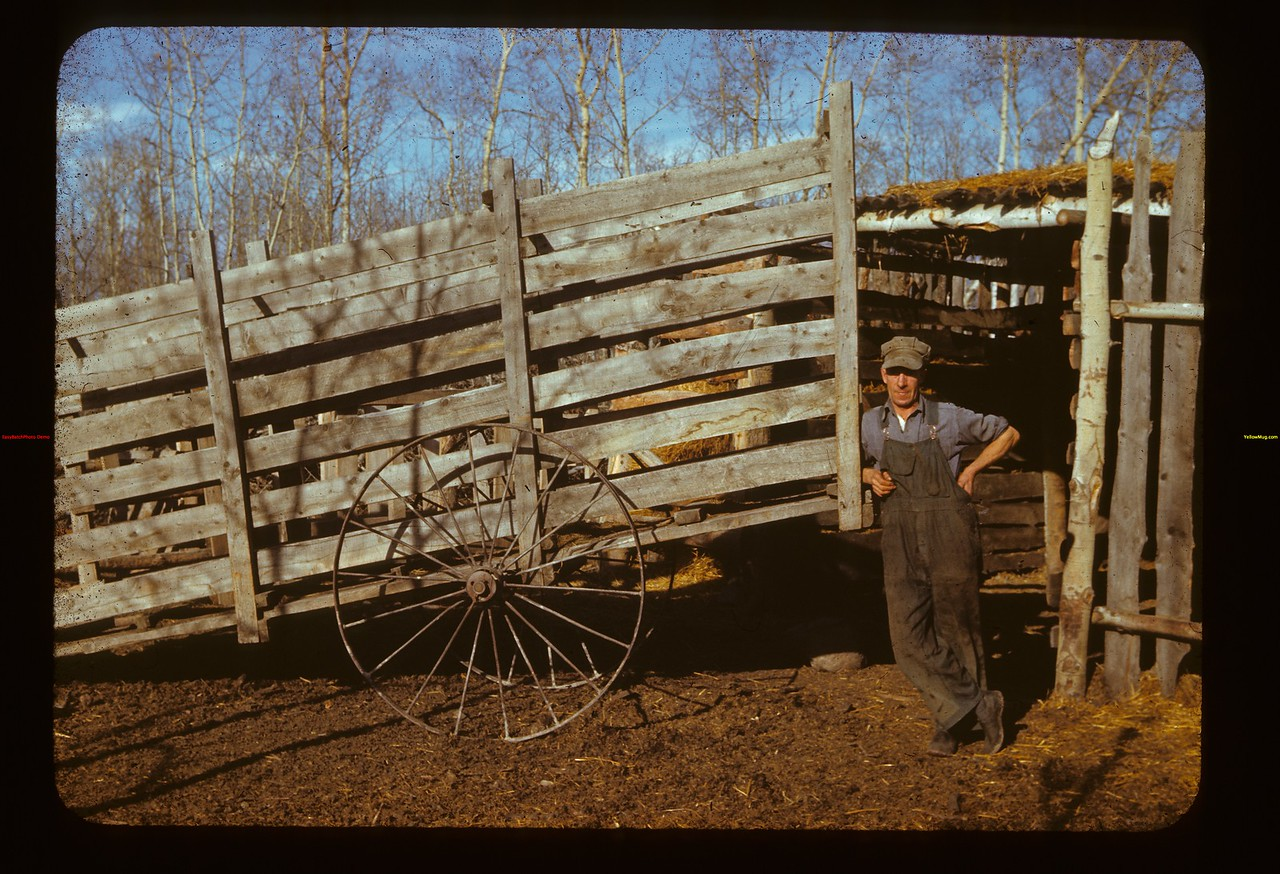 Art Bullen and loading shute Frenchman Butte 10/23/1941