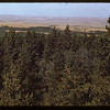 Forest and plain - Cypress Hills park	 Cypress Hills	 08/26/1948
