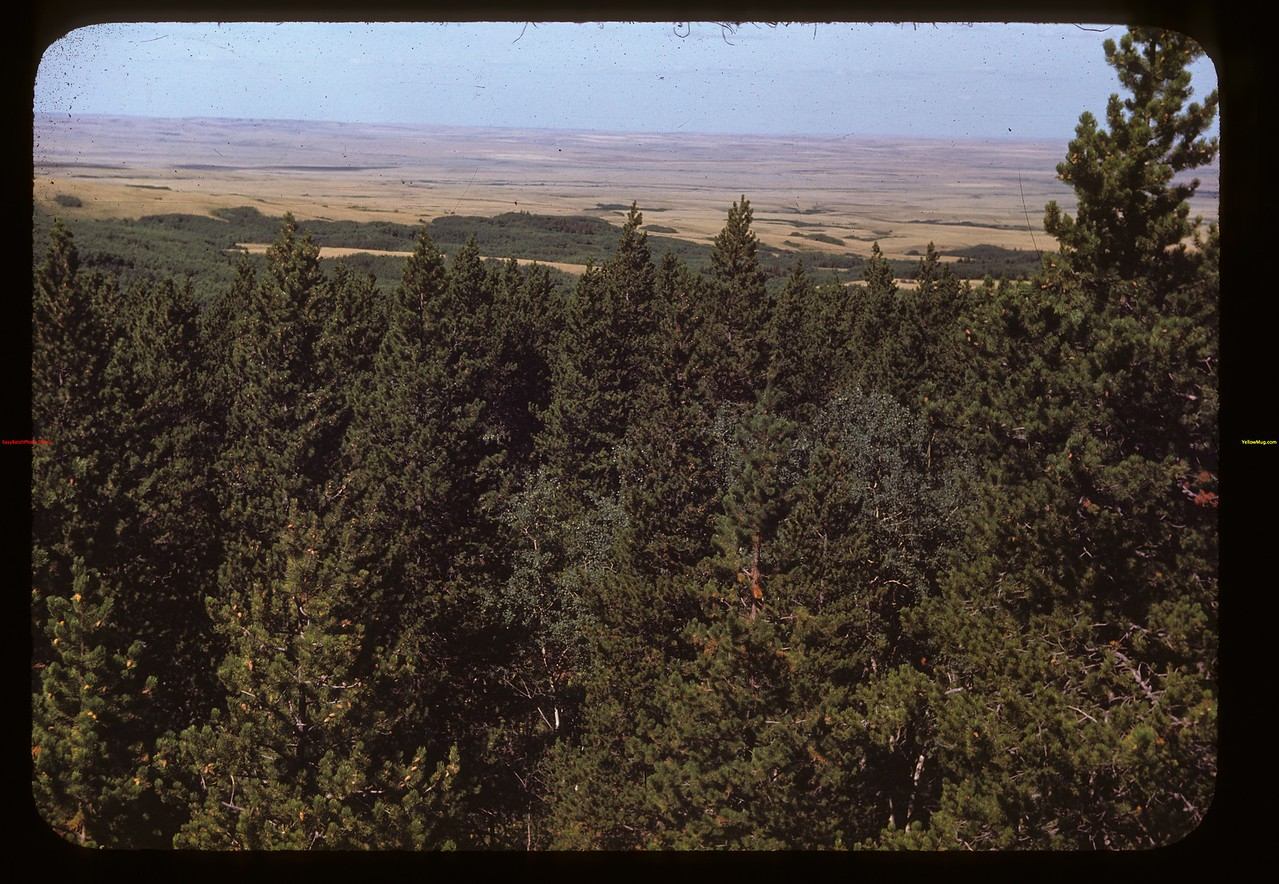 Forest and plain - Cypress Hills park Cypress Hills 08/26/1948