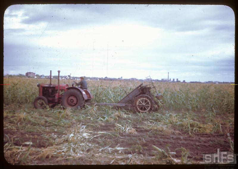 Harvesting 65 acres of hybrid corn.  North Battleford.  09/21/1944