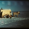 Jackfish Lake (ice fishing).	 Meota	 01/06/1942