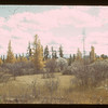 Spruce - tamarac - willow cotton - Meadow Lake Forest Reserve	 Meadow Lake	 10/02/1941