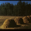 Forest & Hay Stacks Madge Lake at Forest Rangers Kamsack 09/14/1949