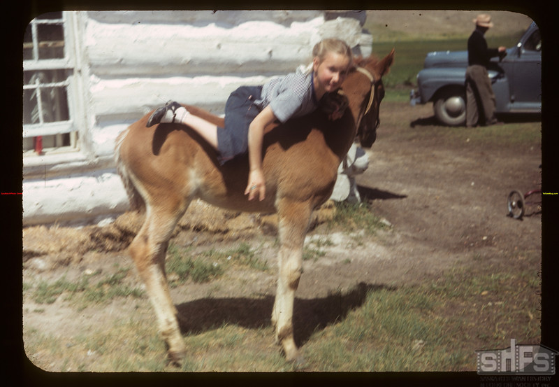 Ann Noland climbing on colt. Eastend 06/12/1949