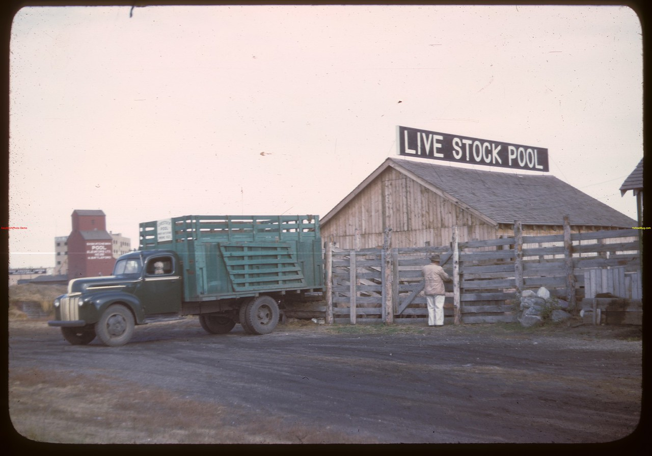 North Battleford Livestock Pool - truck and yards..  North Battleford.  10/07/1946