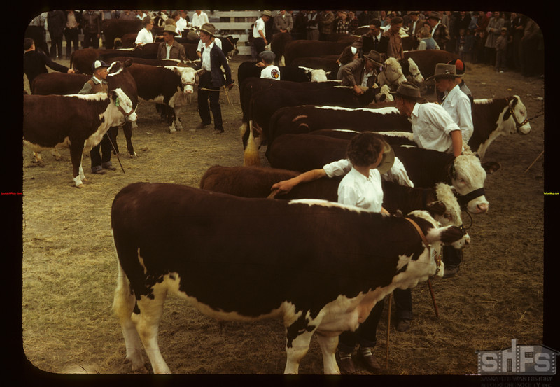Calf Club line-up show and sale	 Consul	 05/31/1949