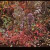Autumn colors. Kibabiscau Beach Lac Vert? 09/26/1946