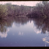 Beaver home up from dam	 Deer Creek	 08/21/1945