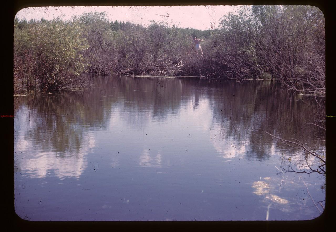 Beaver home up from dam Deer Creek 08/21/1945