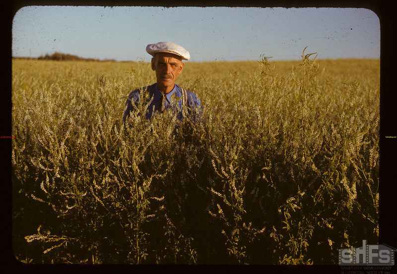 John Burrill in sweet clover Cudmore 07/11/1941