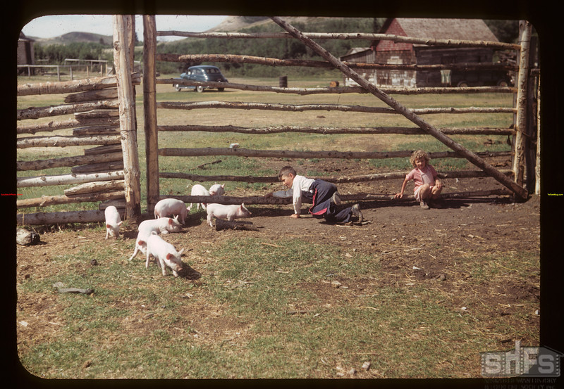 Raymond & Judy White and little pigs. Eastend 06/12/1949