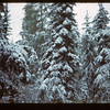 Spruce & Tamarac-snow. South Lower Makwa	 Loon Lake	 09/29/1944