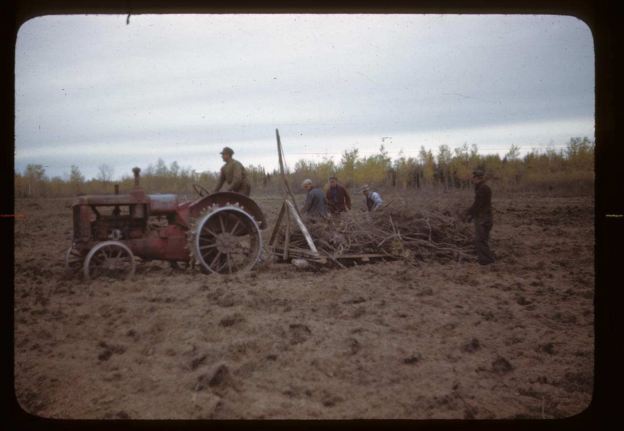 Algrove co-op farm; clearing new land Planned Community Settlement at Algrove - co-op farm with 16 members.  Women not members yet.  Algrove. 09/26/1946
