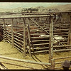 Eastend stock yards - Fat Stock Show & Sale.	 Eastend	 06/01/1949