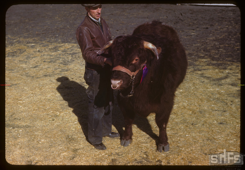 Wilfred Elliott and Grand Champion shorthorn steer (Graighurst Peter) sold by J.D. Bell of Swift Current for $1100 - Regina Winter Fair..  Regina.  03/28/1946