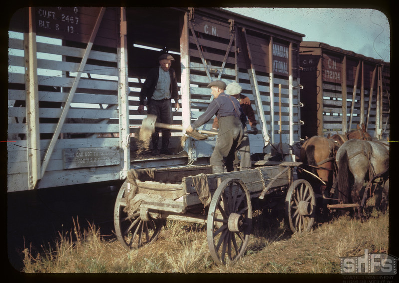 Sanding cattle cars - CN stock yards. St. Walburg. 09/02/1944