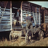 Sanding cattle cars - CN stock yards.	 St. Walburg.	 09/02/1944