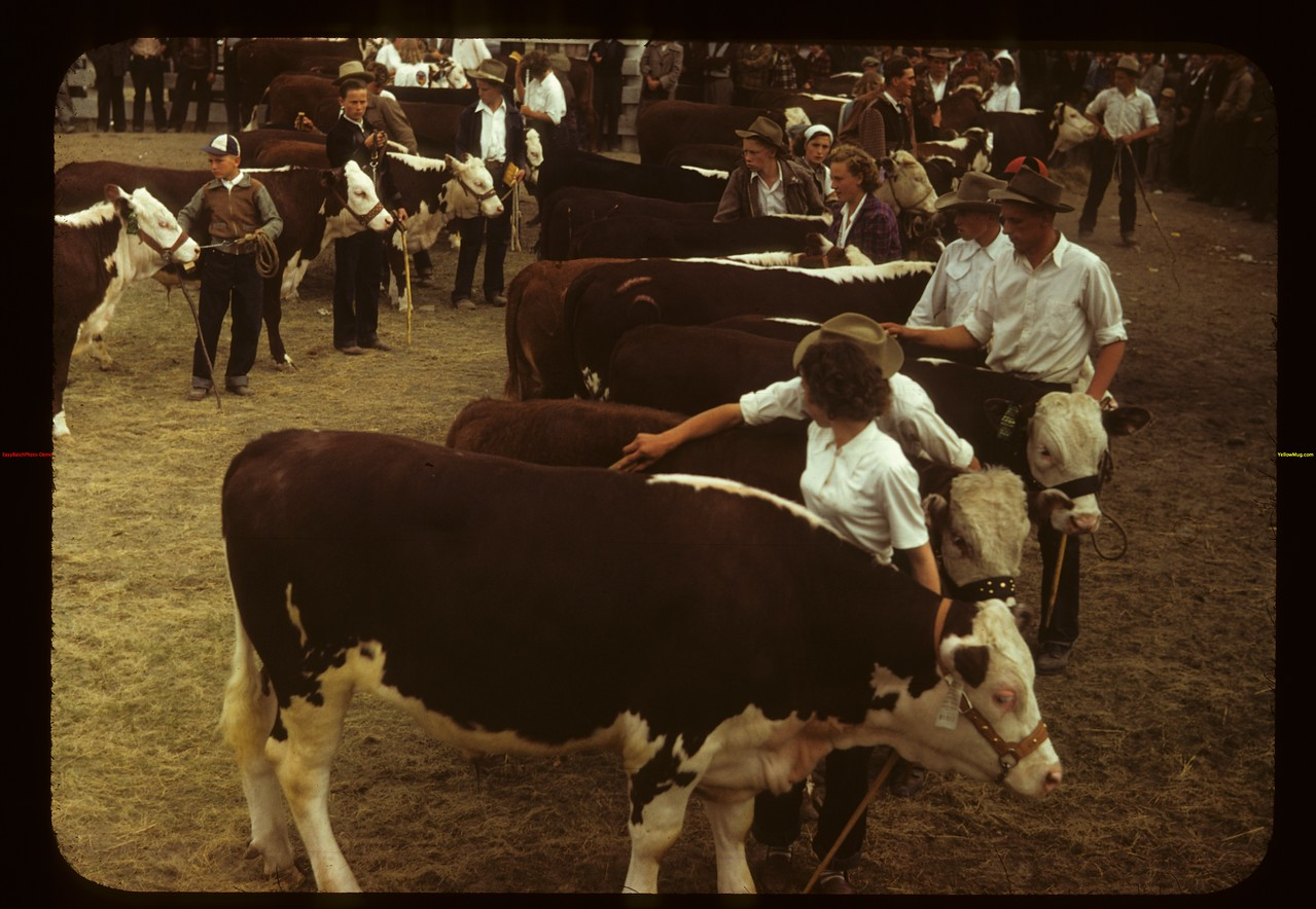 Calf Club line-up show and sale Consul 05/31/1949