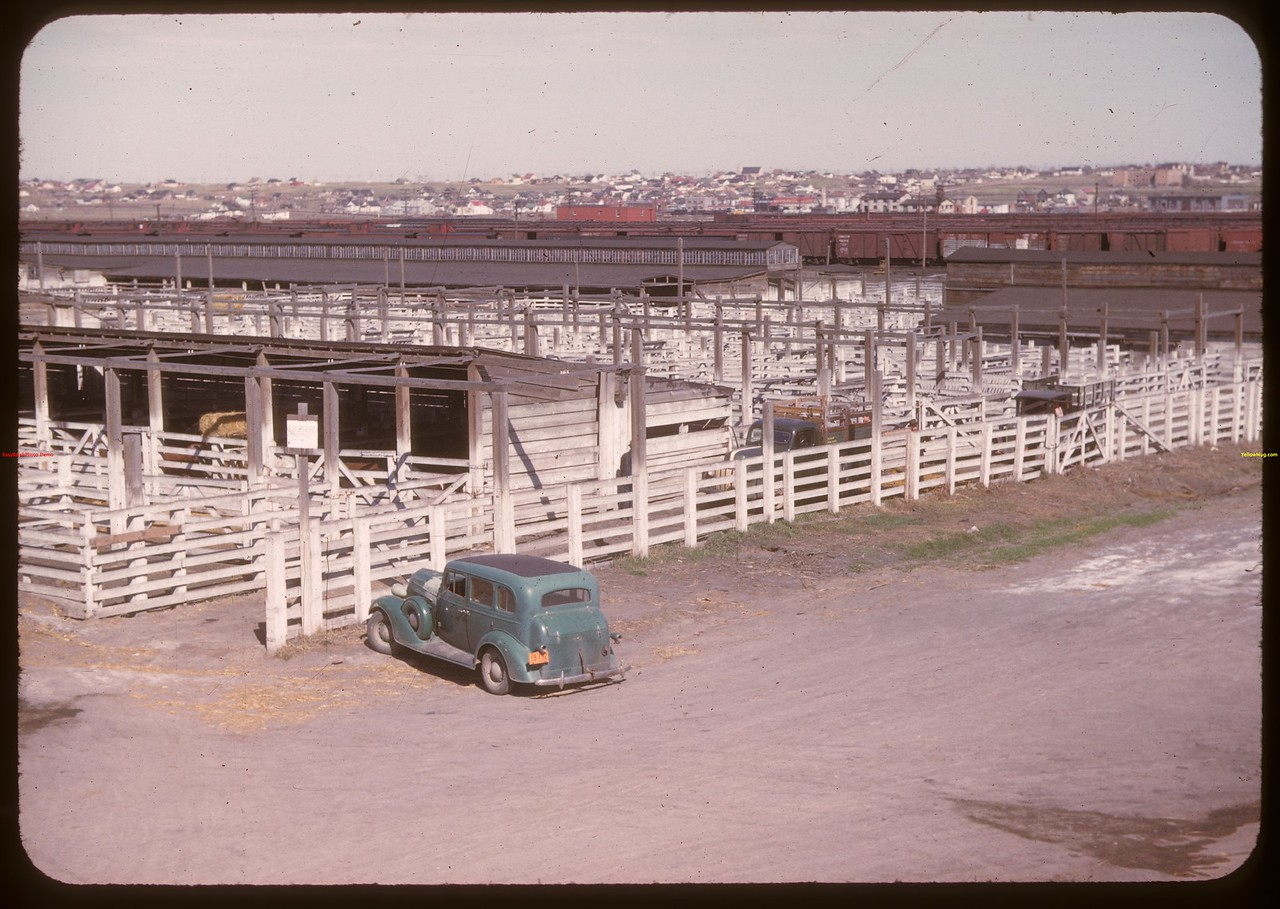 Co-operative stock yards. Moose Jaw 04/28/1947