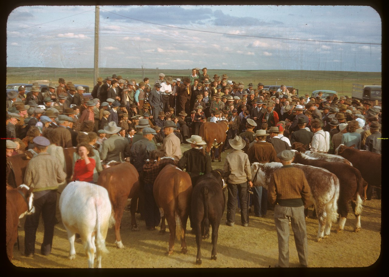 After the show - waiting to be sold..  Ponteix.  06/09/1948