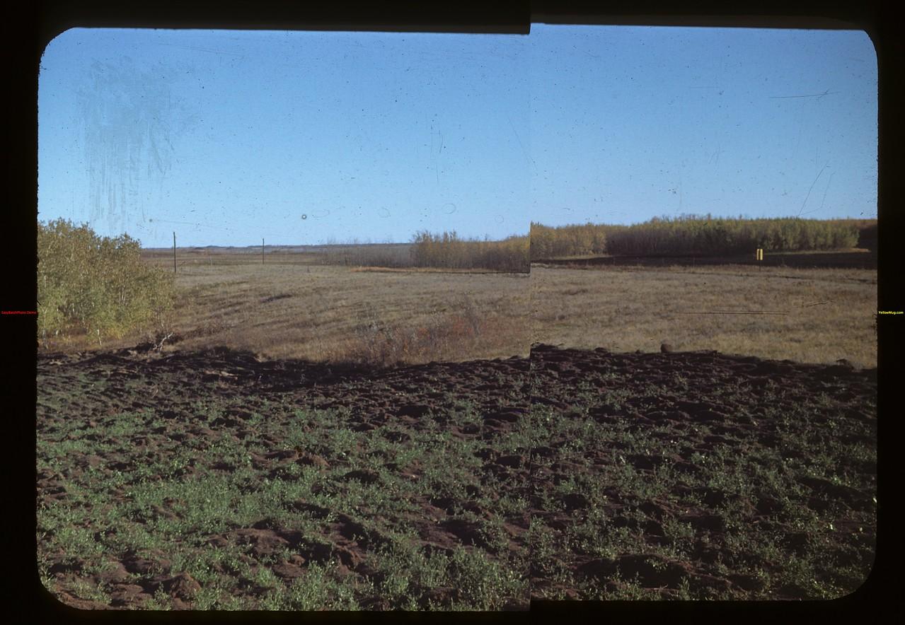 Metis cover - looking south toward [Carlton] Trail Duck Lake 10/01/1948