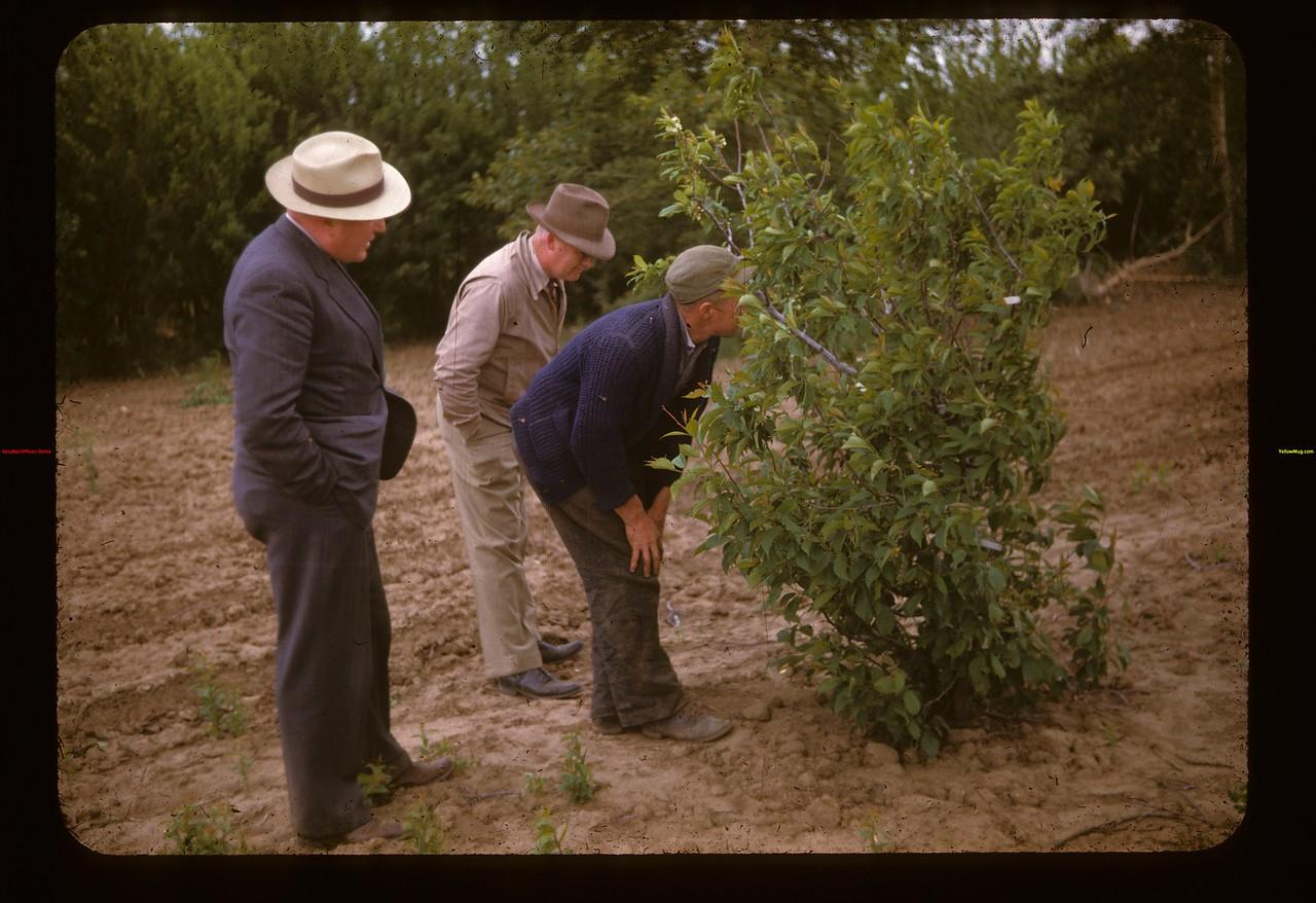 Warner & Lambie guests in Irwin Studer's nursery Lac Pelletier 06/20/1947
