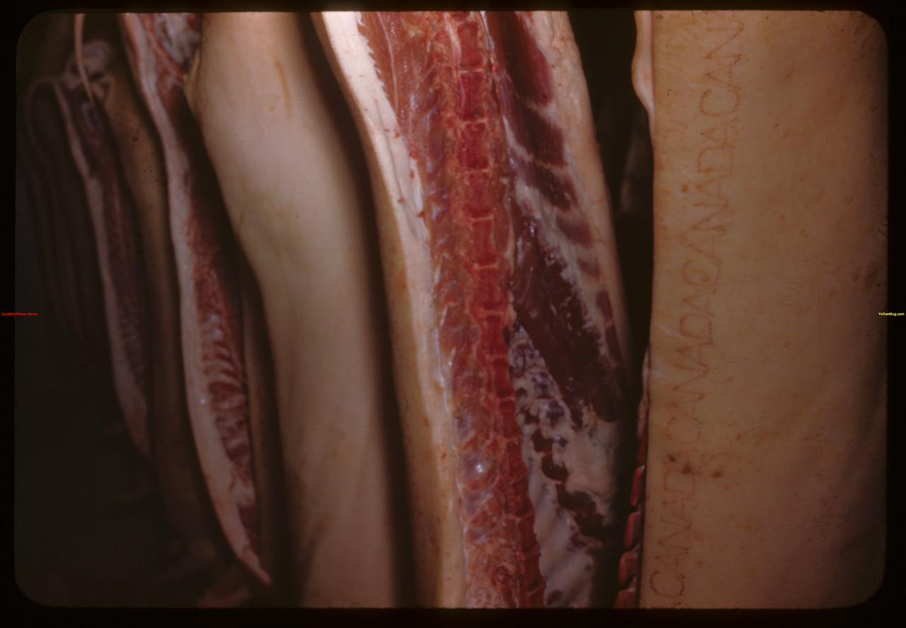 First prize bacon of Frank Short from Stony Beach - Regina Winter Fair.  Regina.  03/27/1946