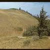 Bald Butte - Cypress Hills Park Cypress Hills 08/24/1948