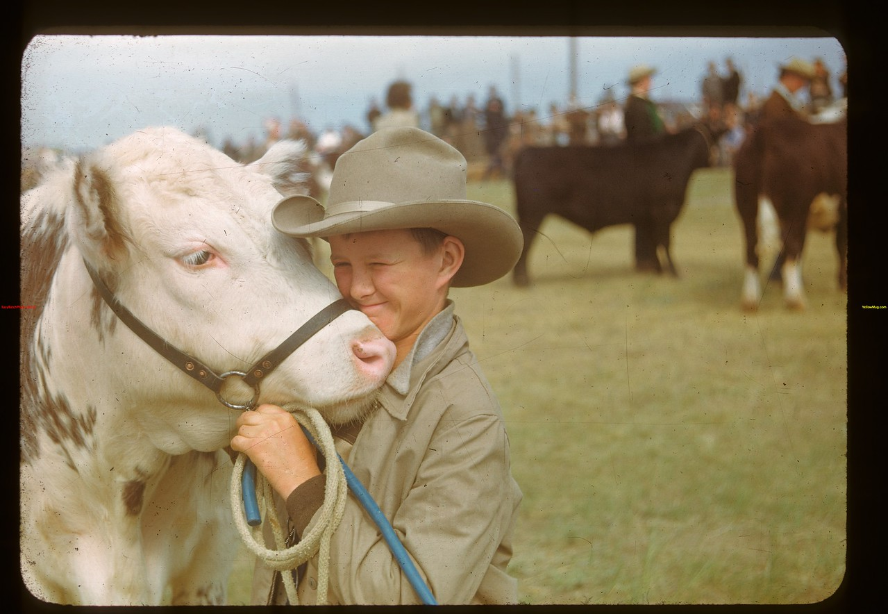 """""""I wish he wasn't sold"""" - results of Calf Club show and sale..  Ponteix.  06/09/1948"""