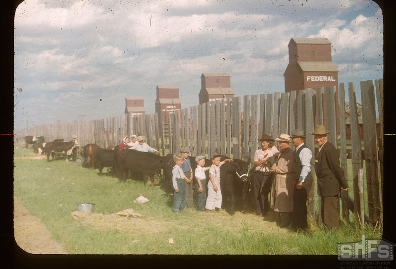 Calf club assembling.	 Mankota	 06/08/1948