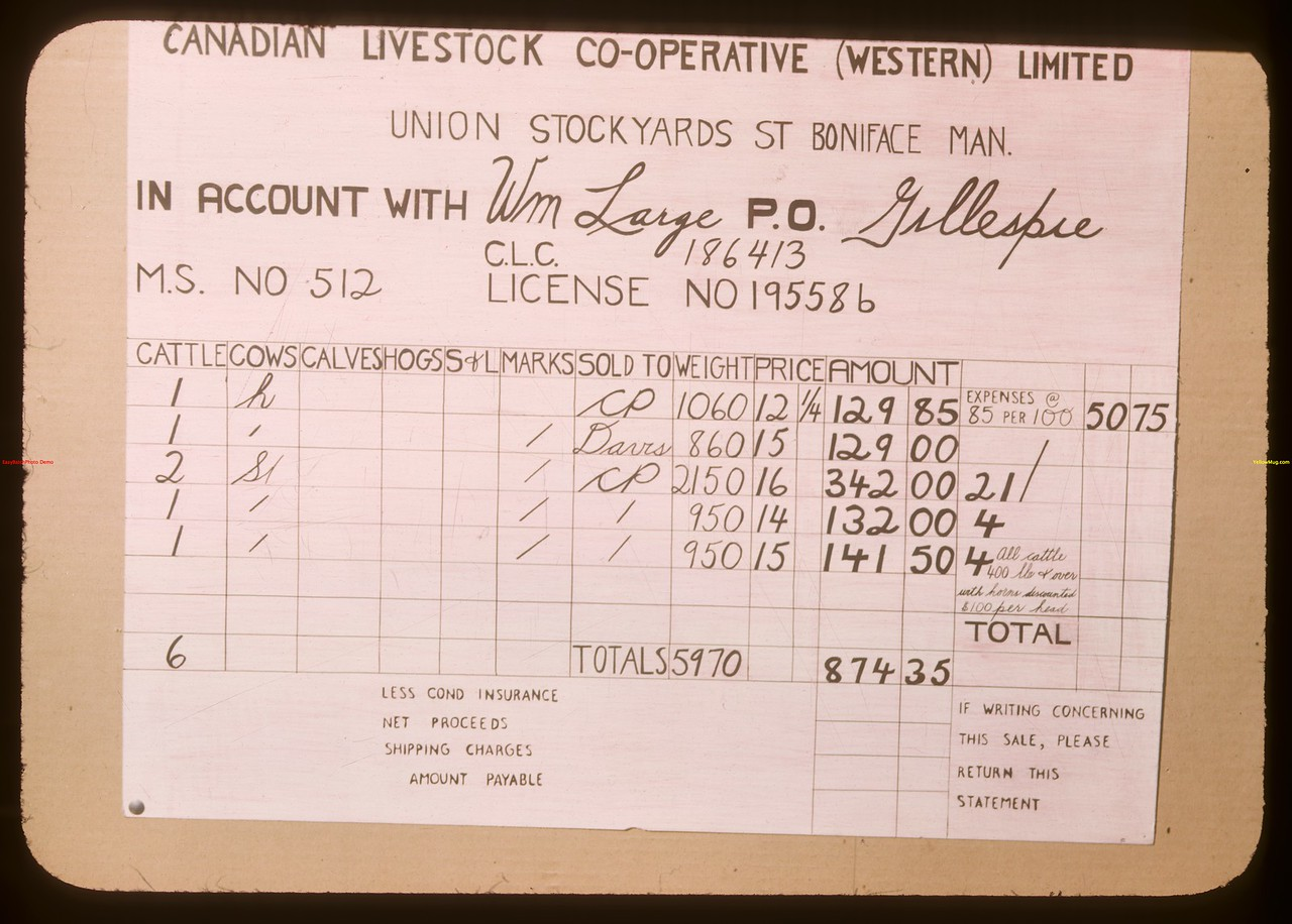 Canadian Livestock Co-operative statement of William Large from Gillespie.  Regina.  04/01/1948