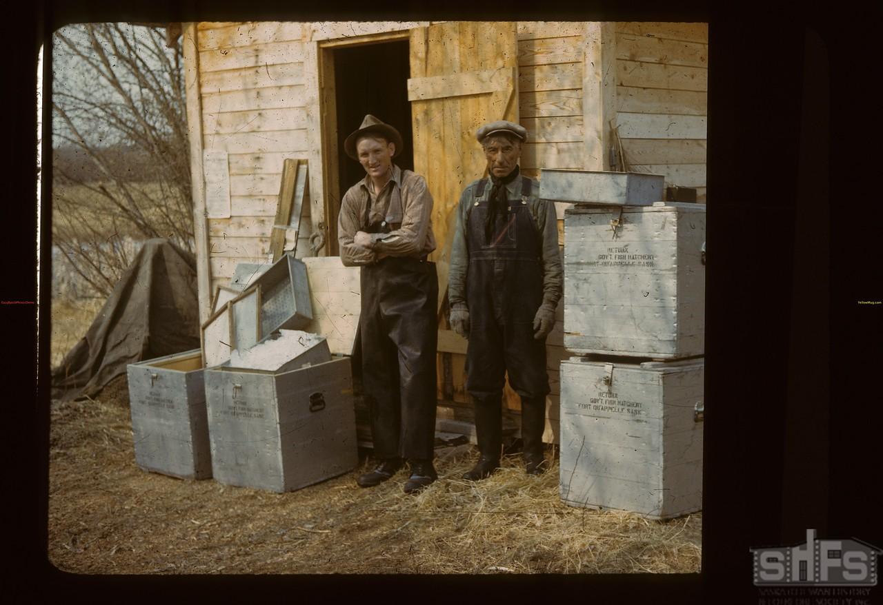 Packing pickerel eggs. Loon Lake.  04/30/1944