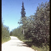 South of Waskesiu.  Waskesiu.  06/18/1946
