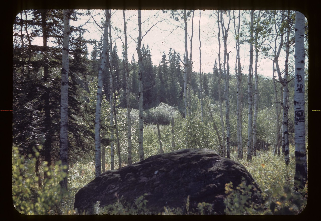 West toward Hogan's - south of Trout Lake. Beacon Hill 08/23/1944