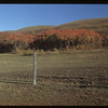 Fall colours - Dr. Alexander's pasture.	 Clarksboro	 09/28/1948