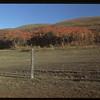 Fall colours - Dr. Alexander's pasture. Clarksboro 09/28/1948