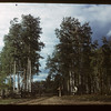 North from Preeceville to Hudson Bay	 Hudson Bay	 09/21/1949