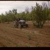 Irwin Studer tractor weeder Lac Pelletier 06/20/1947