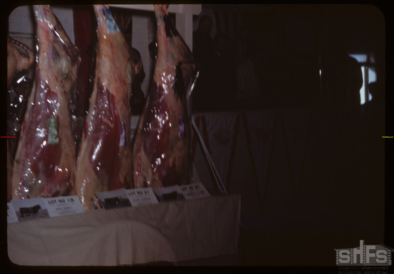 Judged on the hoof then in the carcass - Regina Winter Fair..  Regina.  03/28/1946