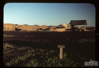 Planer - Carrot River co-op farm. 07/18/1949