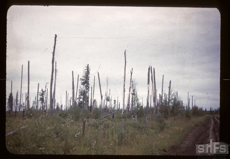 Heavy bush soil along Carrot River Carrot River 08/21/1947