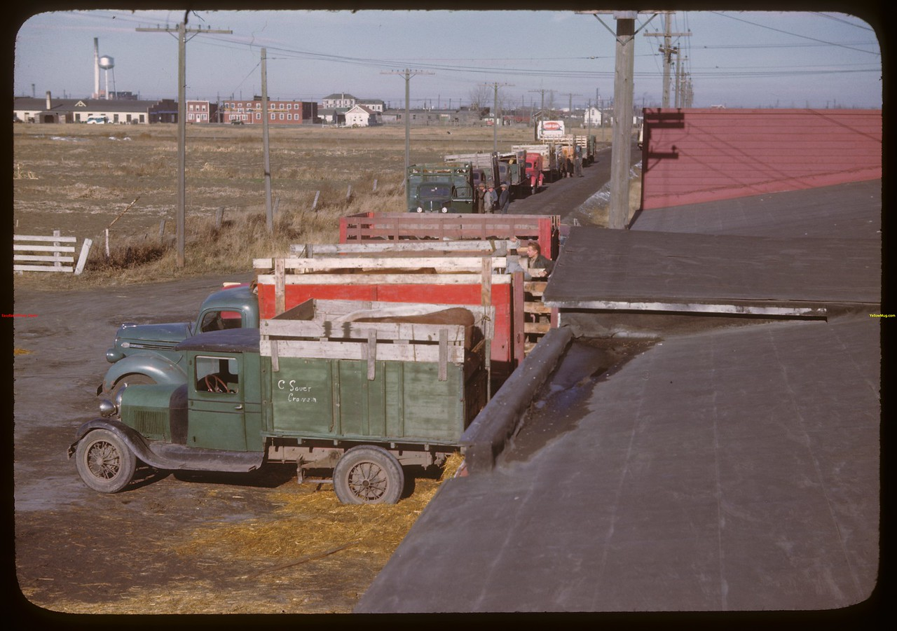 Trucks unloading and in line - Livestock Pool stock yards.  Regina.  10/22/1946