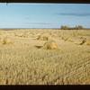 Sask. Harvest 3 mi S. of Lenvale Lenvale 09/27/1946