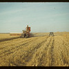 D. J. McCuaig's harvest south of Eastend. Eastend. 08/28/1942