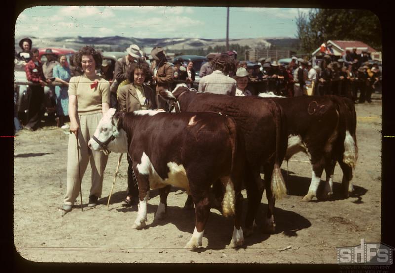 Best calves - Calf Club Show & sale. Eastend 06/01/1949