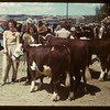 Best calves - Calf Club Show & sale.	 Eastend	 06/01/1949