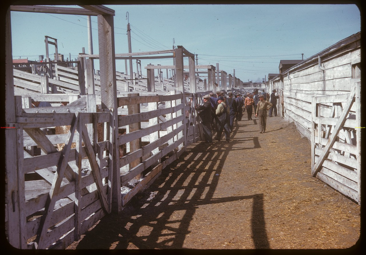 In the alleys - Co-op stock yards. Moose Jaw 04/28/1947