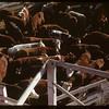 Regina Co-op stock yards and railway loading shutes..  Regina.  10/27/1947